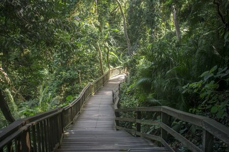 Horizontal photo of wooden walkway found in the sacred Monkey Forest in Ubud, surrounded by lush green trees and vegetation. Bali Indonesia