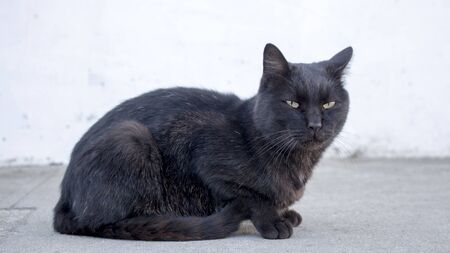 Horizontal photo of a sad and mean stray black cat looking suspicious at camera. Unfriendly abandoned cat with dirt in mouth. Blurry background.