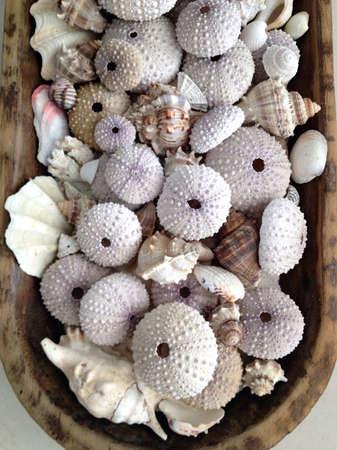 Seashells, conchs and sea urchin shells in wood vase