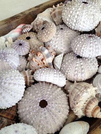 Different types of seashells in wood vase Imagens