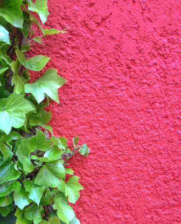 Red rextured wall with green leaves on left, space for text Фото со стока