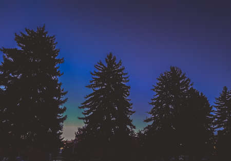 Trees looming in the twilight