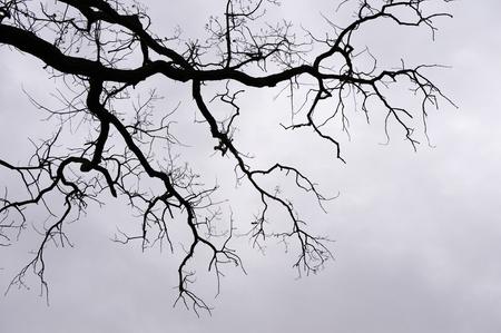 벌거 벗은 나뭇 가지