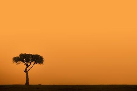 일몰 아프리카 아카시아 나무 스톡 콘텐츠
