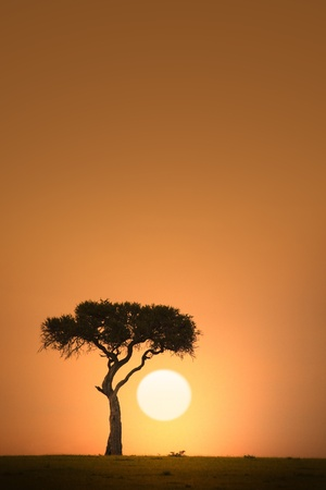 horizon over land: African acacia tree silhouette at sunset Stock Photo