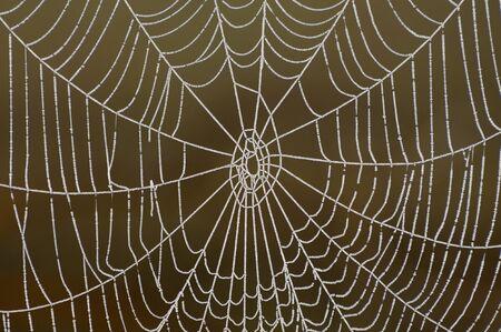 dewey: Dewey Spider Web