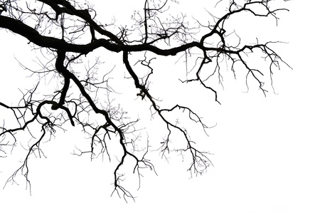 dryness: Leafless branches isolated on white background
