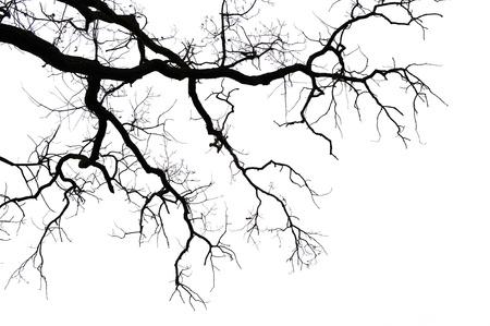 dead trees: Ramas sin hojas aisladas sobre fondo blanco