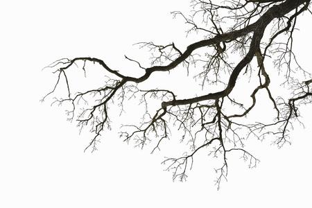 흐린 하늘에 대하여 잎이 나무의 자연 색 실루엣
