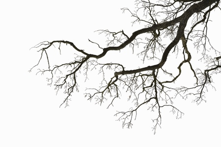 dry and clean: Natural color silhouette of a leafless tree against an overcast sky  Stock Photo