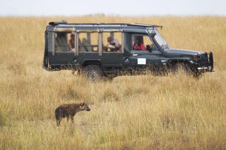 game reserve: Hyena and Safari Vehicle in the Masai Mara National Reserve, Kenya Stock Photo