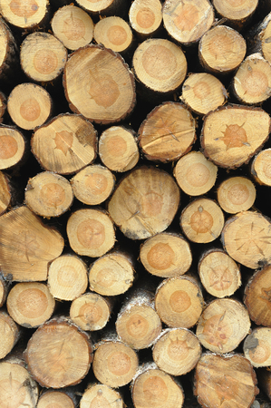 Front view of stacked logs photo