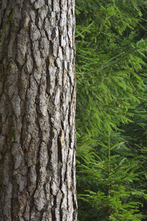 Close-up of a tree trunk in a forest photo