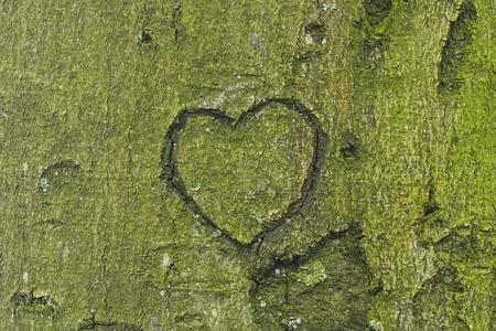 木の幹に刻まれた心