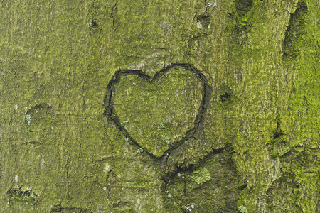 A heart carved into a tree trunk