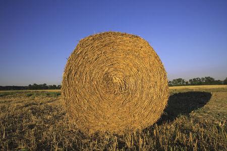 bale: Bale of hay in field