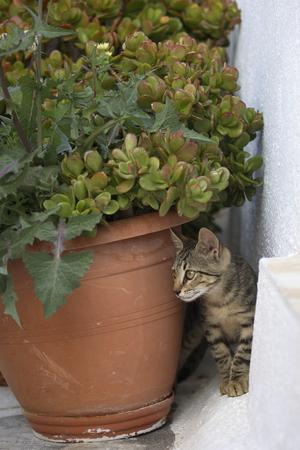 housecat: Young kitten behind plant pot Stock Photo