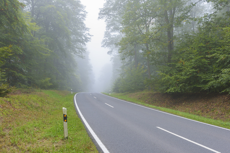 misty forest: Empty asphalt road in the misty forest