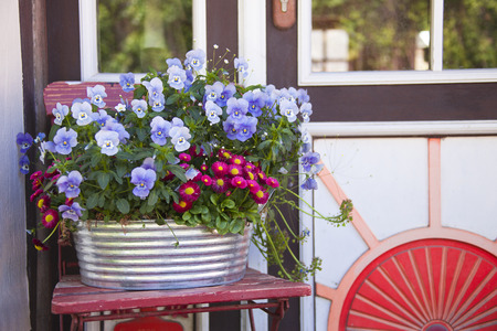 no entrance: Flower pot with Pansies