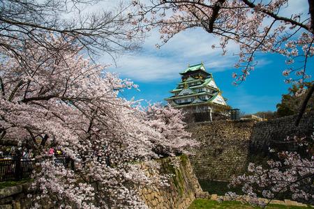 flor cerezo: Castillo de Osaka