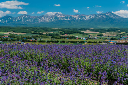 View of meadow field in Flowerland, Kamifurano, Hokkaido, Japan Stock Photo