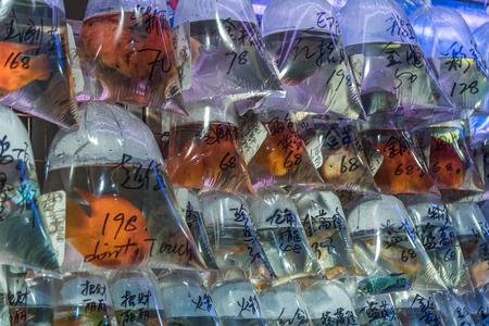 Goldfish market, Mong Kok, Hong Kong