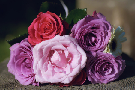 Vividly colored roses bouquet positioned on a tree trunk under strong sunlight
