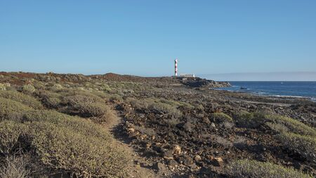 Arid landscape of Malpais de la Rasca, a natural reserve close to Palm-Mar town, with views towards the lighthouse or Faro Punta de Rasca, and the endemic vegetation, Tenerife, Canary Islands, Spain 版權商用圖片