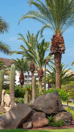 Luxuriant corner with landscaped lush vegetation, evergreen palms, grass and mineral elements, created as a green oasis in the middle of the town of Los Cristianos, Tenerife, Canary Islands, Spain