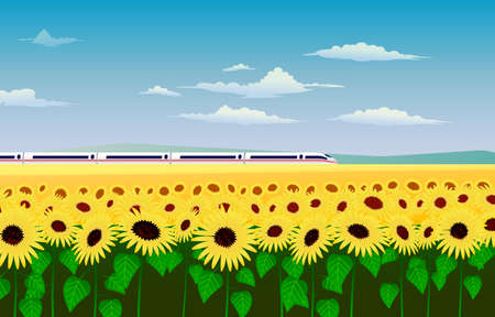 high speed railway: Large field of yellow sunflowers, blue sky with light clouds, the high-speed train crosses the horizon. Summer landscape vector illustration.