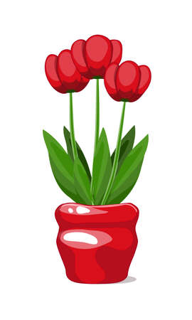 Three bright red tulips blooming in a bright scarlet flower ceramic pot vector