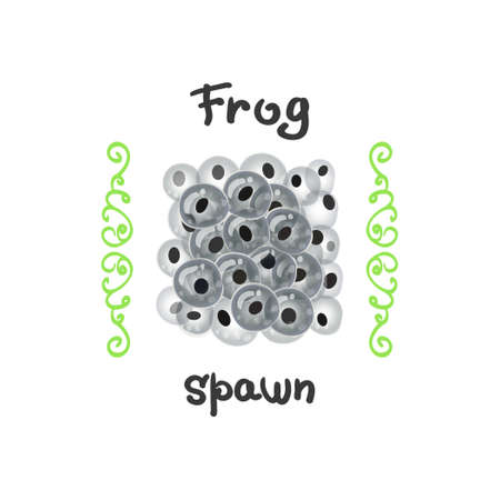 frog egg: Frog eggs as a delicacy. Fertilized clutches, frog-spawn or of a large fish.