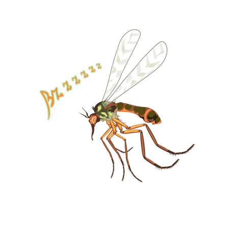buzzing: The mosquito flies suck blood. Blood-sucking insects, mosquitoes, buzzing, the sound bzzzz flap its wings. The big bad mosquito. Bright colors with fine details, realistic art illustration in vector