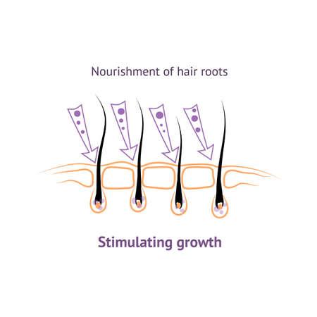 음식은 인간의 모발에 뿌리를 내리고 탈모의 성장을 촉진합니다. 머리 전구 아이콘 심볼의 구조.