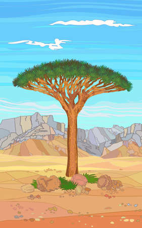 Tropical tree of the island of Socotra, on white background. Plants and stones of the desert.
