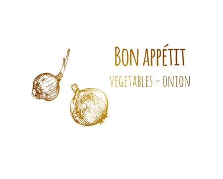 Hand drawn sketch vintage onion. Food sketch and kitchen doodle. Can use for cafe and restaurant menu design. Vector illustration.