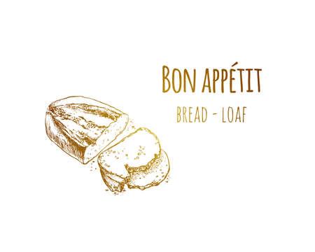 Hand drawn sketch vintage bread loaf. Food sketch and kitchen doodle. Can use for cafe and restaurant menu design. Vector illustration.