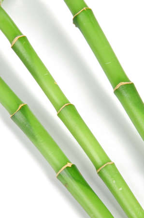Lucky bamboo photo