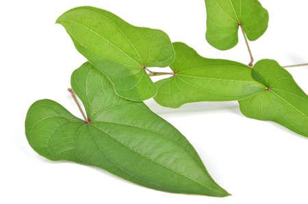 Chinese yam leaf Stock Photo