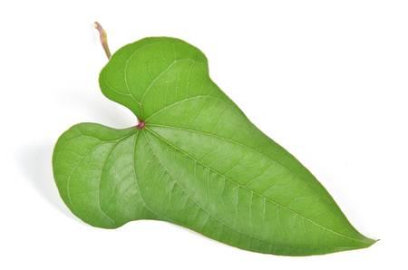 chinese yam: Chinese yam leaf Stock Photo