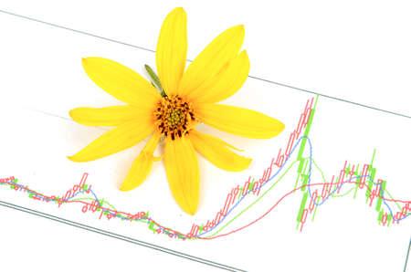 Jerusalem artichoke flowers and stock graph photo