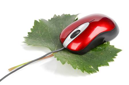 Computer mouse and leaf photo