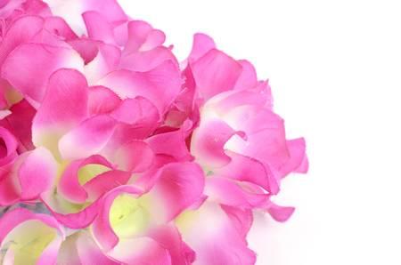 Flower Stock Photo - 12605847