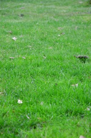 Grass Stock Photo - 12700379