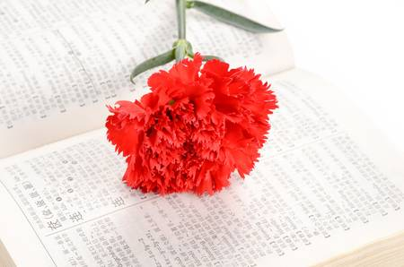 Carnation and book photo