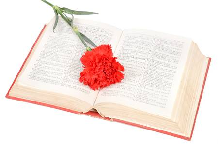 Carnation and book Stock Photo - 12976500