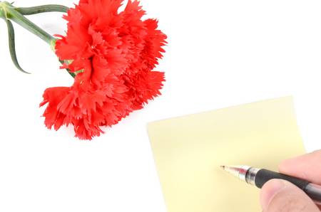 Red carnation and card Stock Photo - 12977221