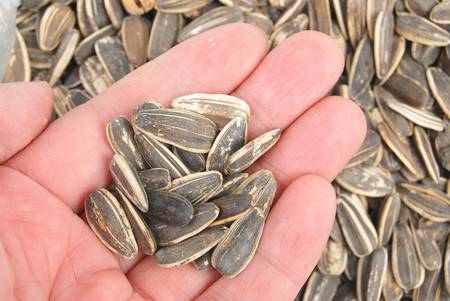 Sunflower seeds Stock Photo - 13318317