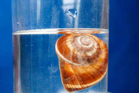 Snail shell in cup photo