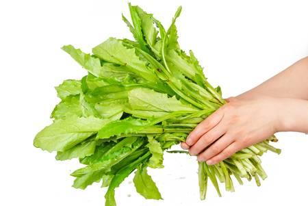 Lettuce Stock Photo - 14154132